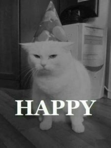 unhappy cat in a birthday hat. text on pic says HAPPY